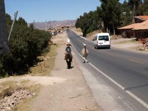 camino Qenqo