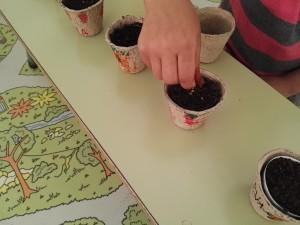 plantamos semillas